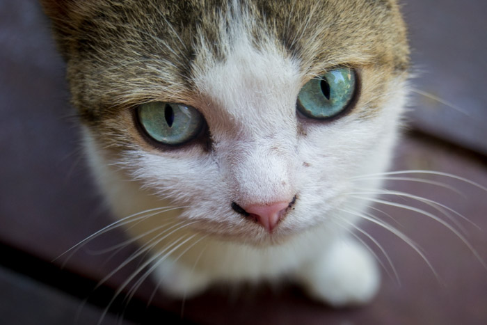 up close photograph of a cute cat's face and eyes