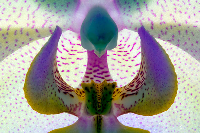 abstract flower photography
