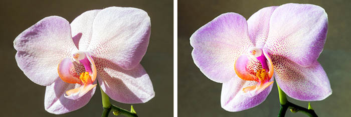 macro flower photography showing the effect of light diffusers