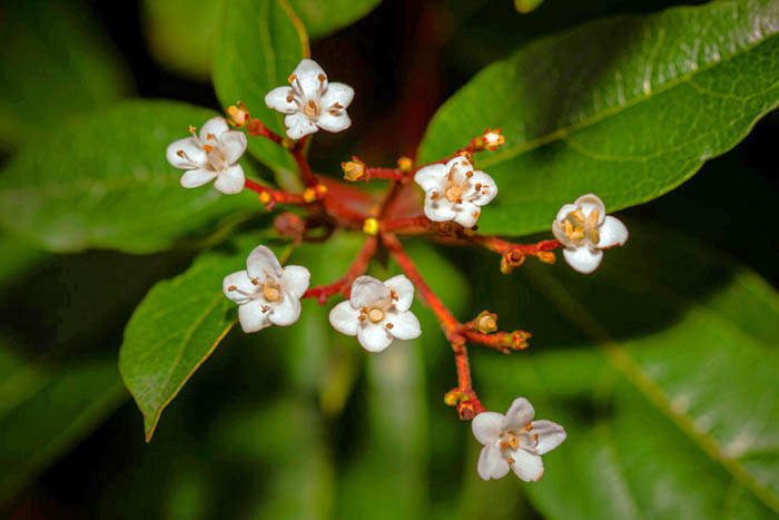 macro photography of flowers