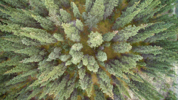 Aerial photography view of a forest of green trees taken by a drone