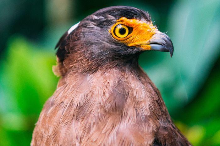 close-up photo of a bird