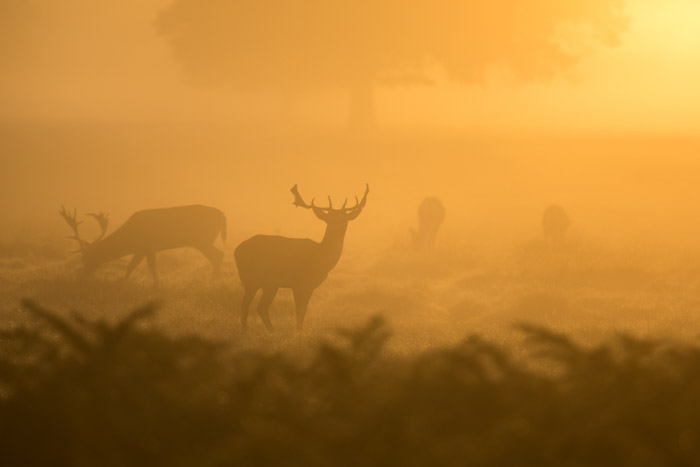 Using a soft, hazy light can create a powerful effect in wildlife fine art photography