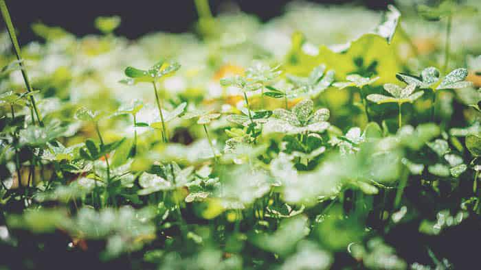 A close up of green foliage shot with a shallow depth of field