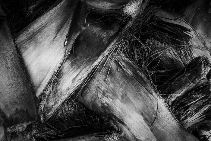Resumo close-up de uma casca de árvore