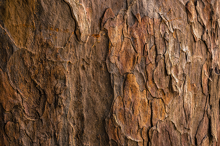 Close up da casca de uma árvore