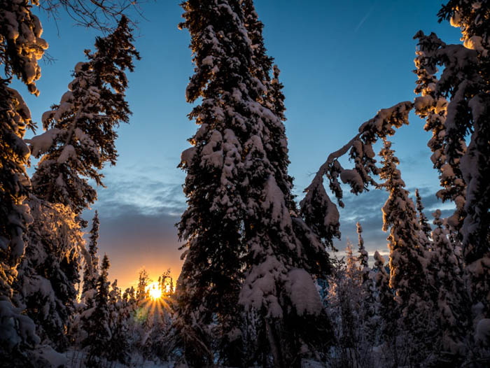 Photo of pine trees covered in snow against a sunset