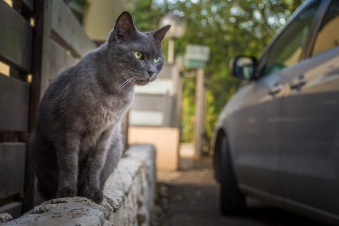 A grey cat sitting beside a grey car