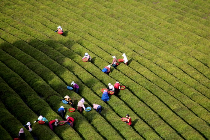 Aerial view of farmers working in fields  - travel photography accessories