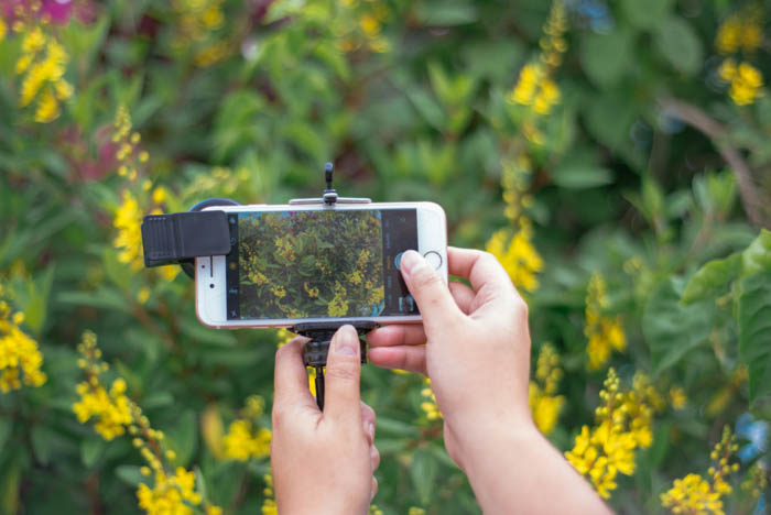 macro iphone photography showing person holding an iphone and taking a photo of flowers