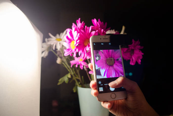 indoor smartphone macro photography setup with a potted pink flower