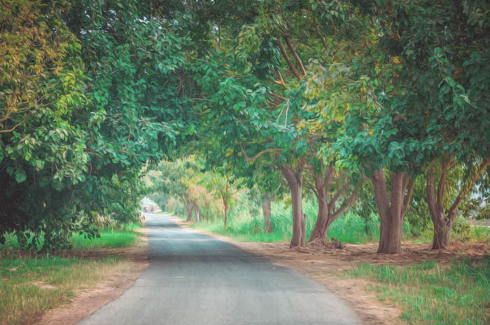 A photo of a tree framed country road, turned into a painting with photoshop