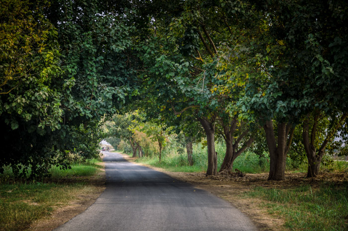 A photo of a country road surrounded by trees