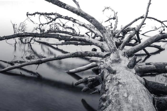 Foto em escala de cinza de uma árvore caída
