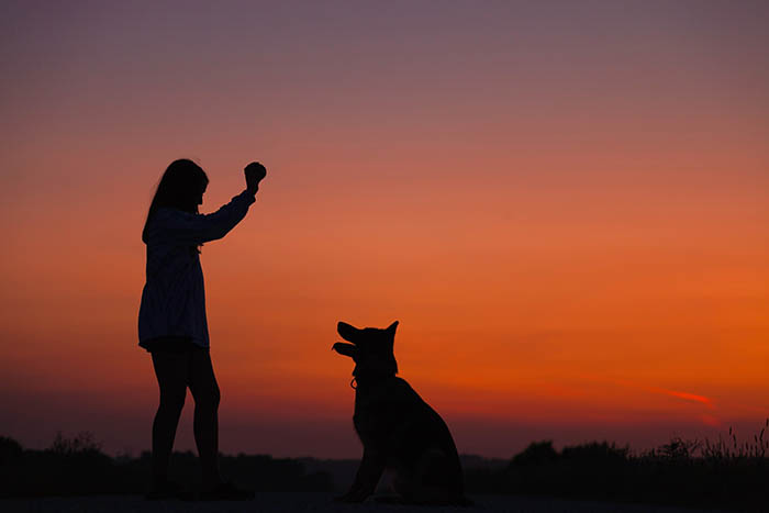 silhouette of girl playing fetch with a dog