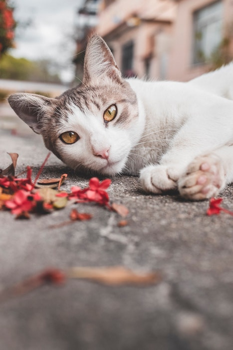 Close up picture of cat lying on the pavement