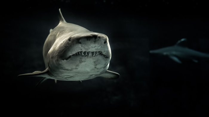 Wildlife photography of a shark taken underwater