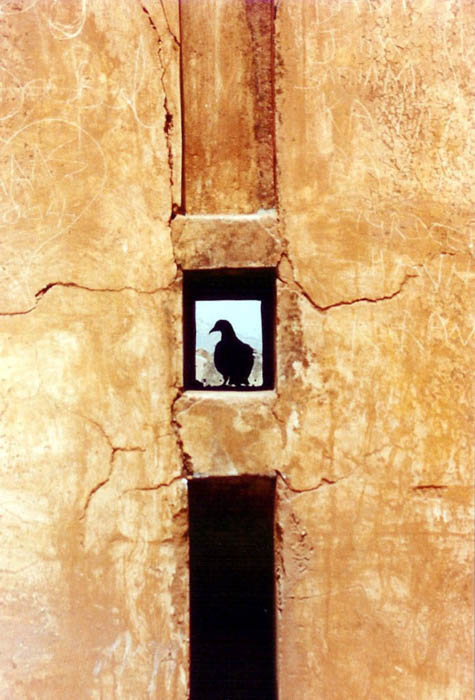 The silhouette of a pigeon in the window of a stone building