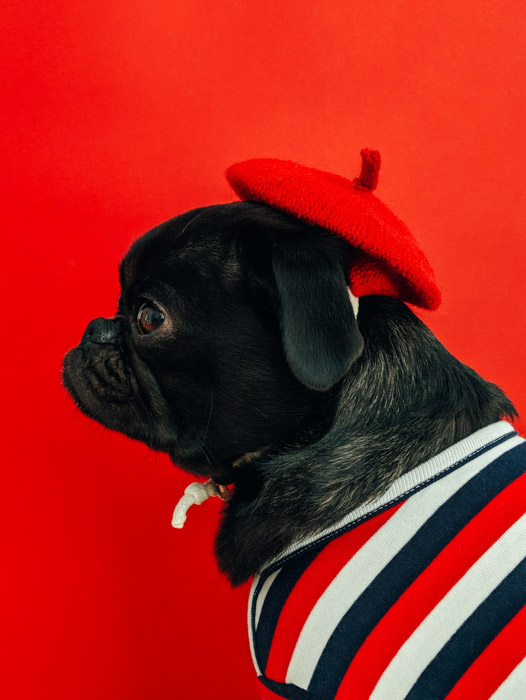 A dog sitting with a red beret, in front of a red background