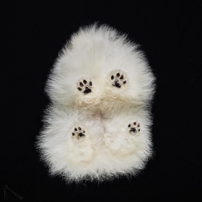 A fluffy white dog