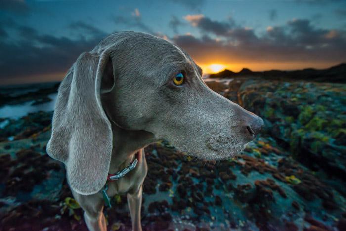 A dog on a beach at sunset