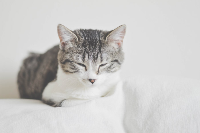 A generic photograph of a cat can be used multiple times