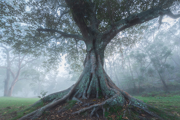 ethereal photo of tree photographed with a Tamron 15-30/2.8 lens