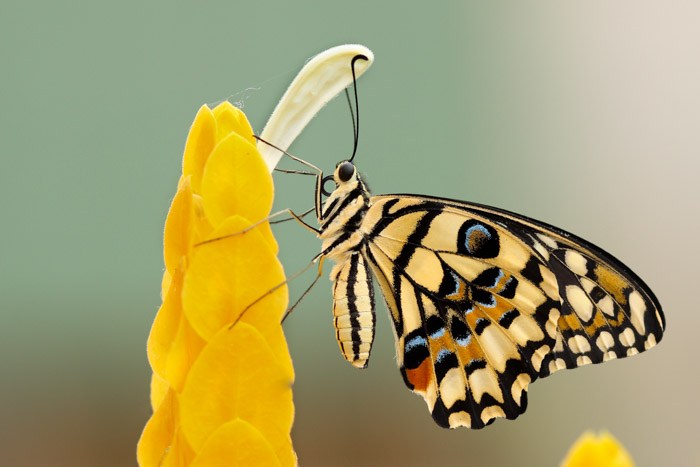 Macro photography of a butterfly