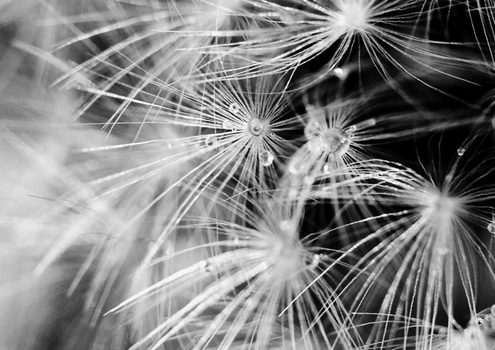 Close up black and white photograph of a plant. Abstract photography ideas.