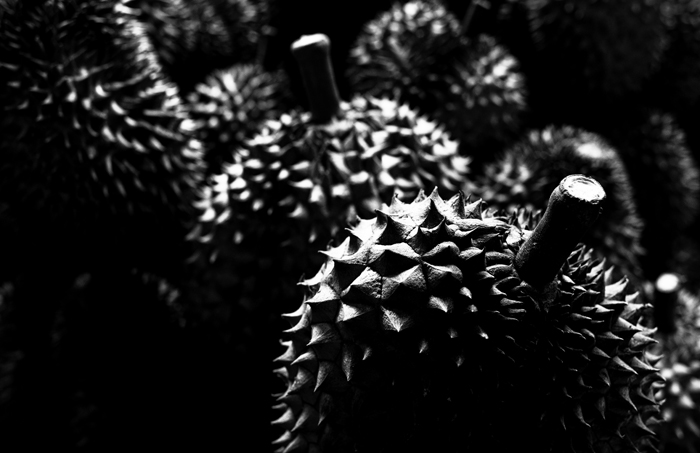 bold shadowy close up of durian fruits,