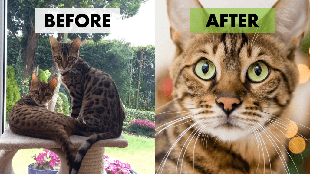 before after cat photography