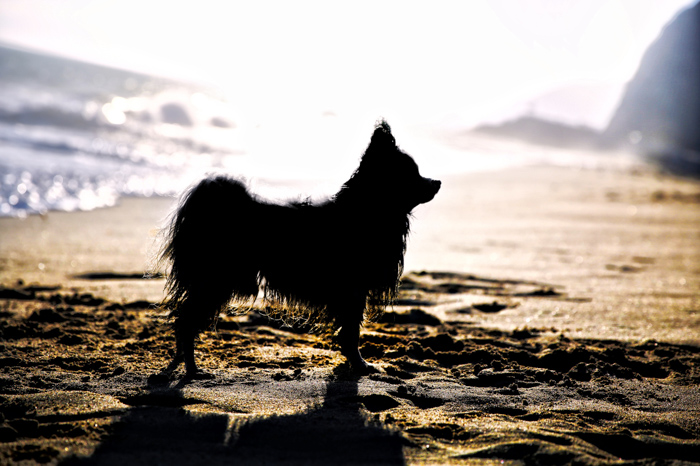 Pet photography of a small dogs silhouette on the beach.