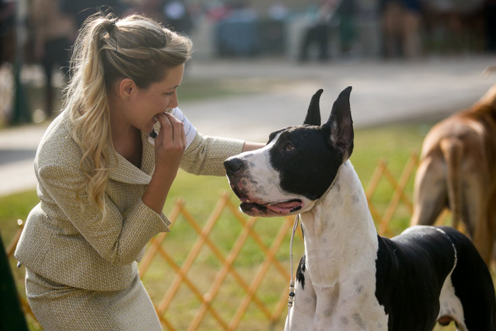 Pet photography of a girl petting a Great Dane.