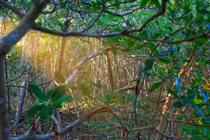 Photo of a dense forest with sunlight breaking through the trees. Landscape photography.