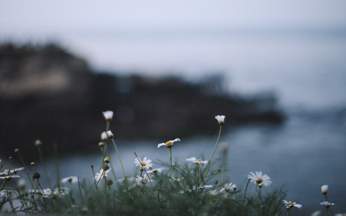 A dreamy moody landscape photo with daisies in the foreground and blurred background, photographed using shallow depth of field.