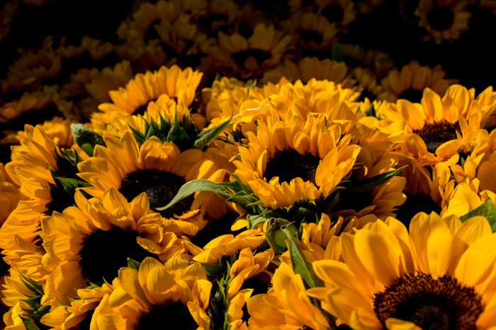 Yellow sunflowers for sale at the market. Documentary photography.