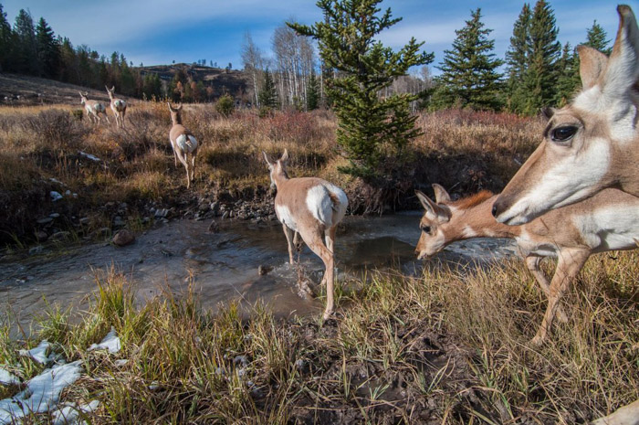 Wildlife photograph of a herd of deer crossing a stream by Joe Riis. Famous photographers to follow online