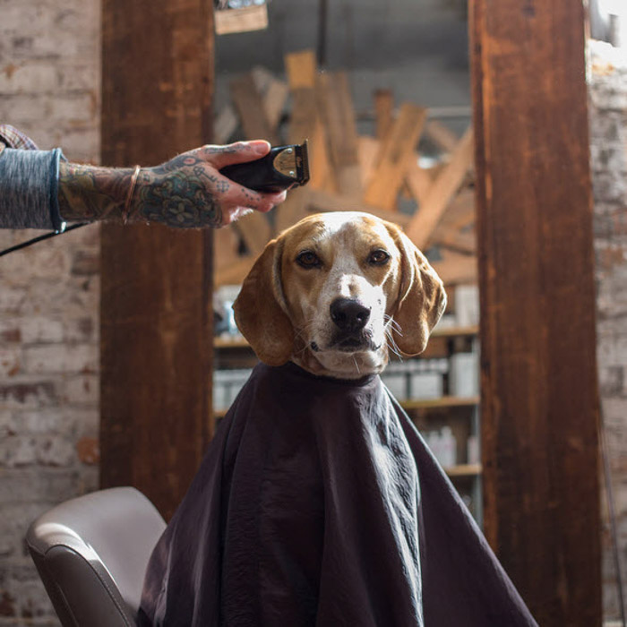 A dog ready for a haircut by Theron Humphrey. Famous photographers to follow.