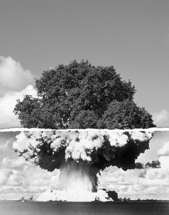 a picture of a tree and an atomic bomb mushroom cloud have been merged