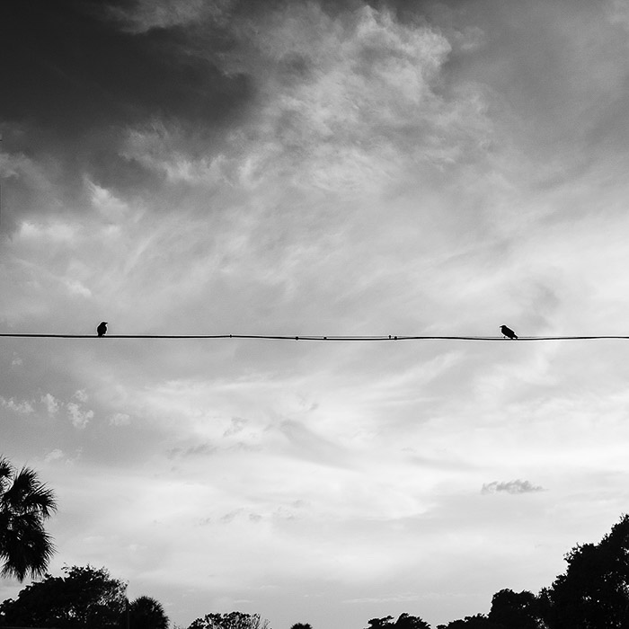 Monochrome minimalist photography of two birds on an electrical wire