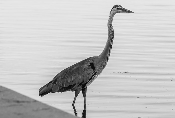 Monochrome minimalist photography of a crane by the waters edge