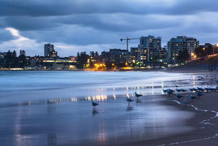 Evening seascape with a flock of seagulls near the shore, a cityscape in the background reflected in the sea. Ocean photography