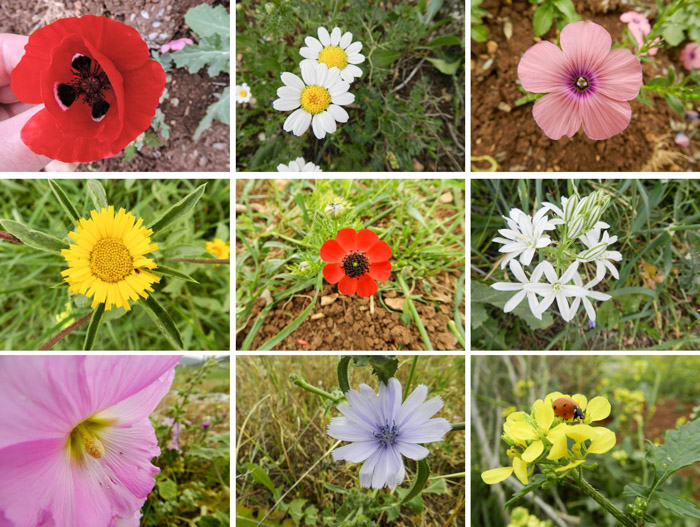 9 photograph grid showing close ups of different flowers, taken with a compact camera (Nikon Coolpix P500)