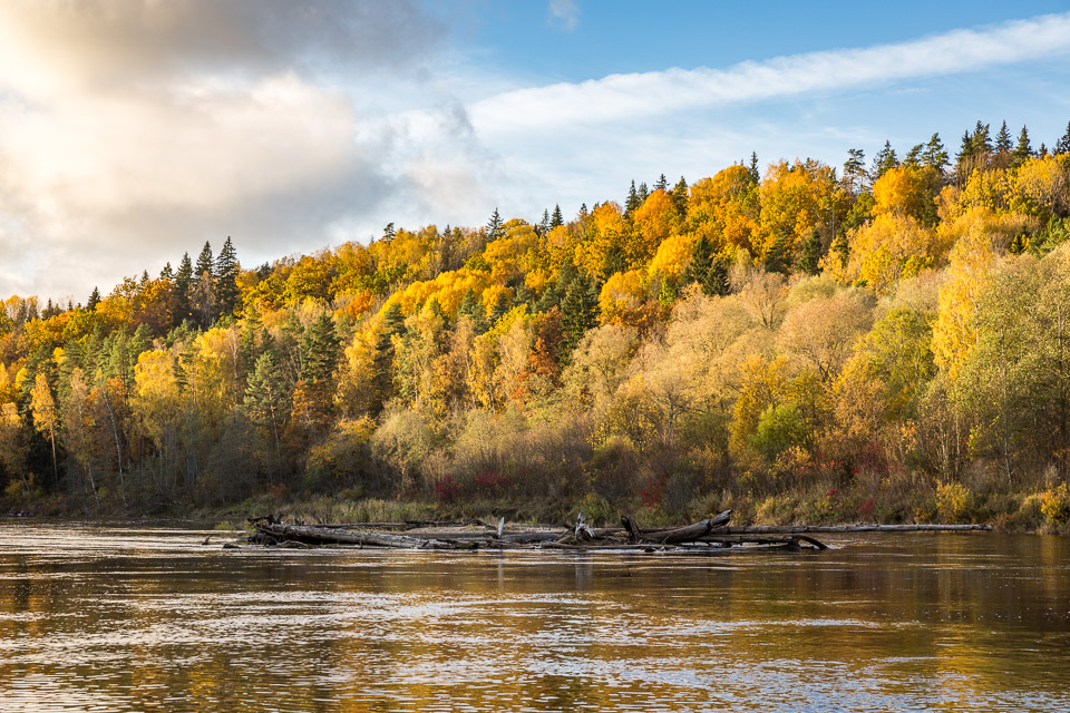 yellow autumn trees at a riverbank with blue skies