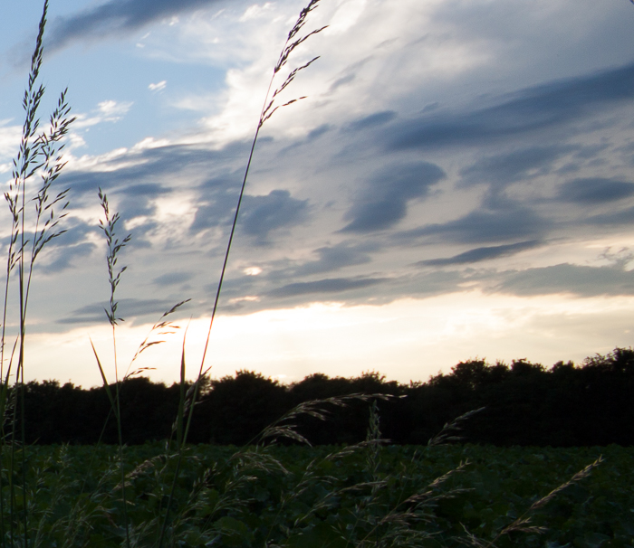 Detail from a landscape photography image, grass and foliage against a cloudy sky. What is HDR photography?