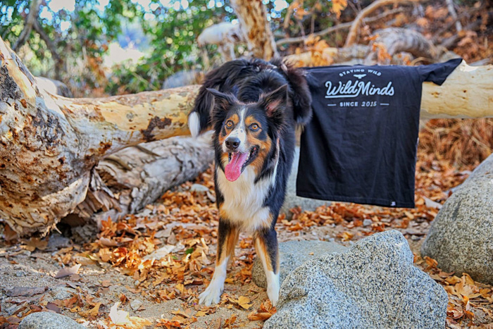 Portrait of a brown and black dog posed in front of a black t-shirt in a forest - commercial photography tips