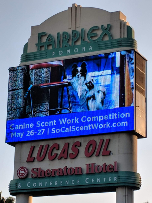 Anabel DFlux's dog photograph featured on a billboard - advertising photography