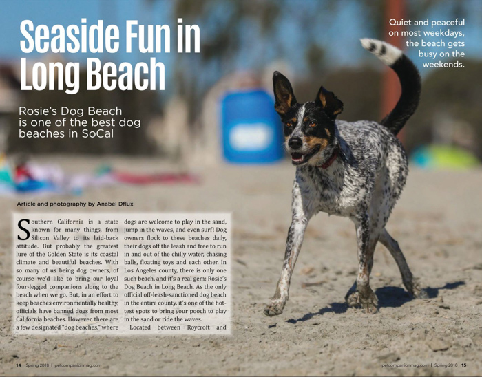 Desert Pet Companion Magazine Article with a commercial photo of a small dog walking on a beach