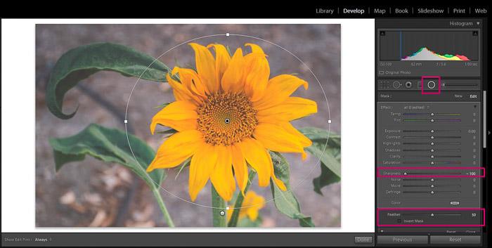 Screenshot of Adobe Lightroom editing flower photography - Lightroom editing blurry background