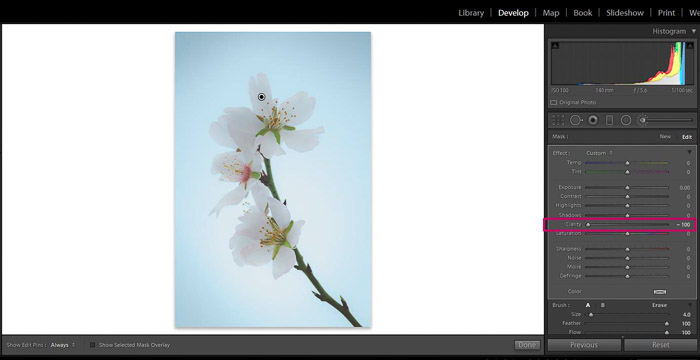 Screenshot of Adobe Lightroom editing flower photography - Lightroom clarity brush decrease
